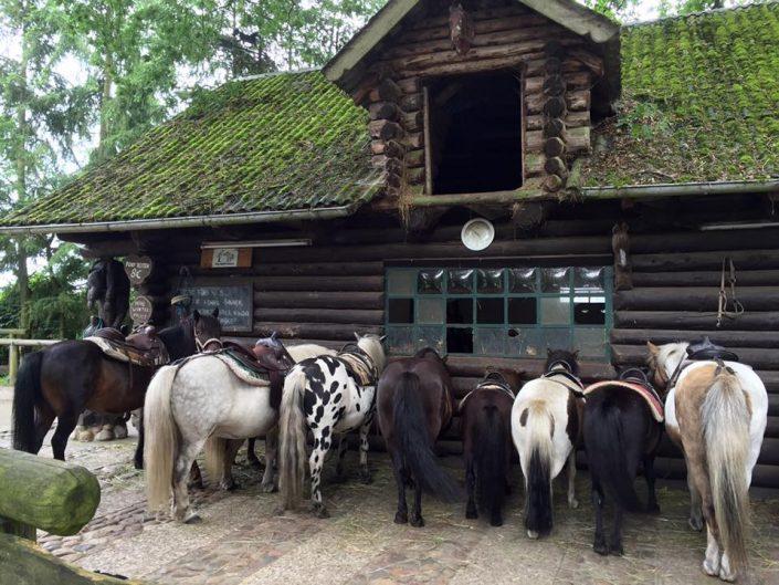 24. Juli 2016 Wedel Pony Waldschänke Ponies