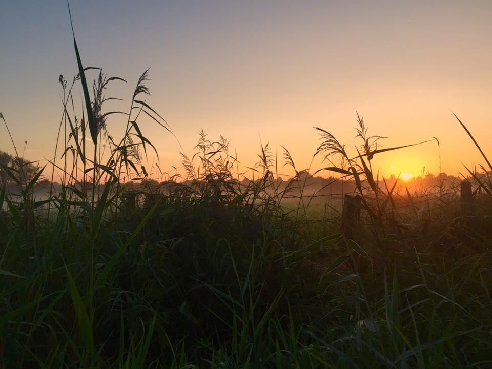 2016 08 26 Wedel Wedeler Marsch Sonnenaufgang