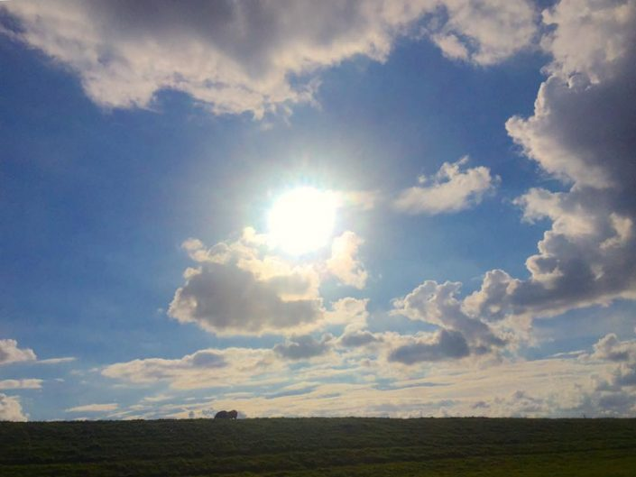 2016 08 28 Wedel Elbe Deich westlich von Fährmannssand Sonne