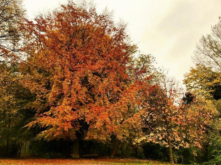 2016 10 30 Wedel Impressionen November Herbst