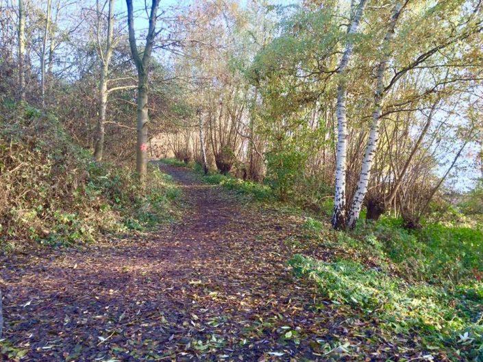 2016 11 12 Wedel Elbe Elbwanderweg Nachmittagsspaziergang Blick Richtung Naturschutzgebiet Wittenbergener Elbwiesen