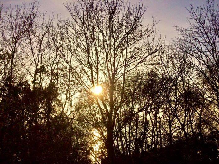 2016 11 12 Wedel Elbe Elbwanderweg Nachmittagsspaziergang Sonne Nachmittag