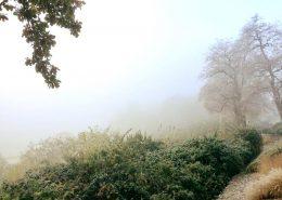 2016 11 12 Wedel Elbe Elbwanderweg im Nebel Bild 1