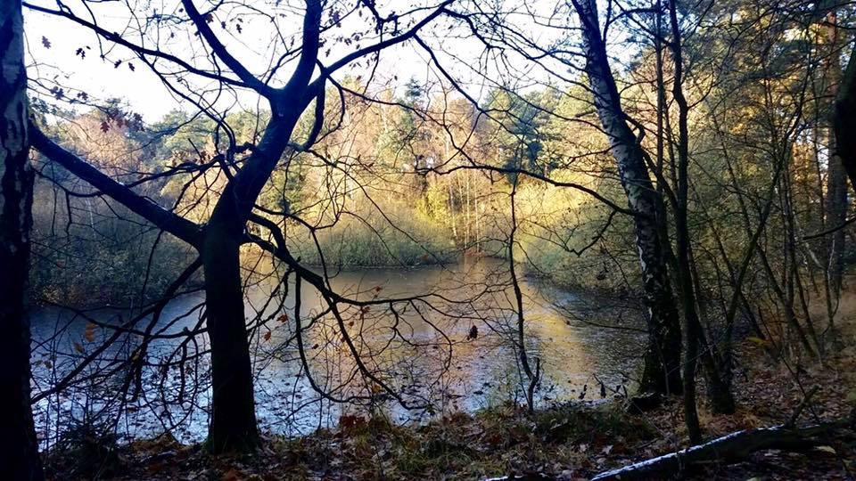 2016-11-13 Mein Wedel - Klövensteen - Wildgehege Sonntagsspaziergang Rüdigerteich