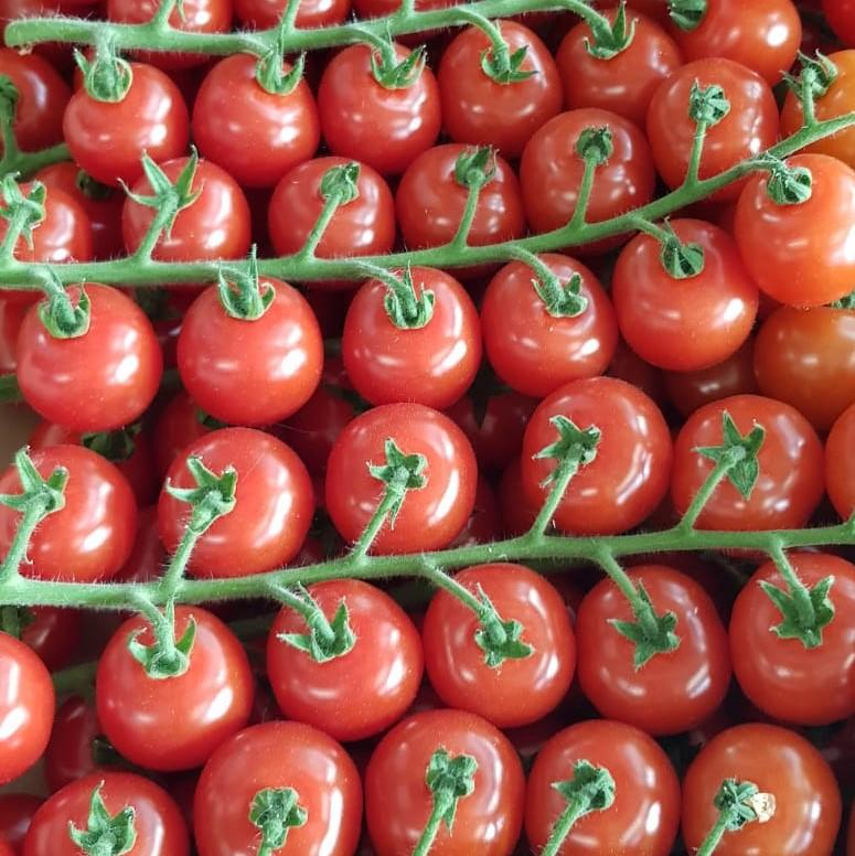 Mein-Wedel-elbkiosk-Frischemarkt-Obst-Gemüse-18