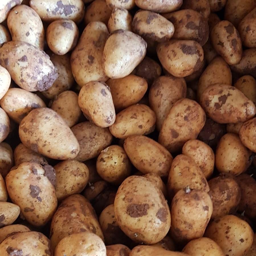 Mein-Wedel-elbkiosk-Frischemarkt-Obst-Gemüse-19