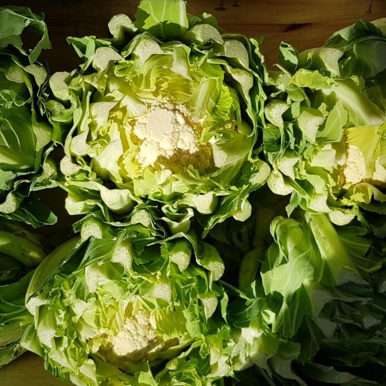 Mein-Wedel-elbkiosk-Frischemarkt-Obst-Gemüse-20